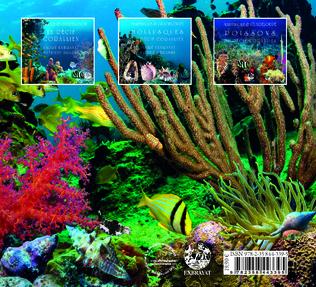 4eme Mollusques du récif corallien